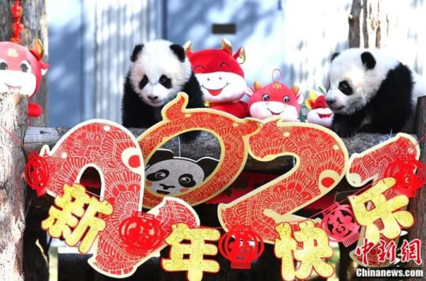 Giant_panda_cubs_meet_the_public_to_mark_start_of_spring
