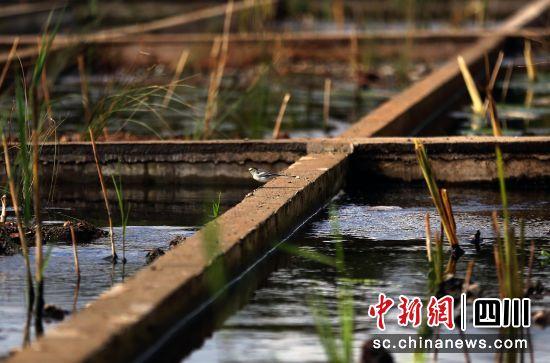 凉山州摩梭家园暨泸沽湖旅游景区管理局污水处理系统(其一)。王磊 摄